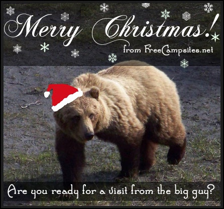 Christmas Bear - Taken in Denali, Alaska 2009