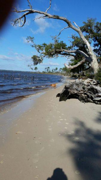 Bayside Campground Aka Grassy Point Milton Florida